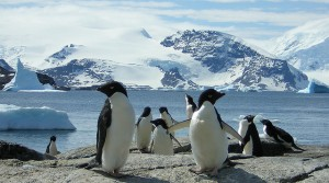 Penguin 2.1 Has Been Unleashed by Google